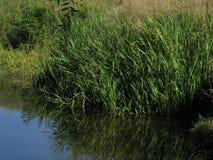 grönt near vatten för gräs arkivbild