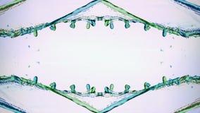 Grönt och blått vatten som plaskar över vit bakgrund stock video