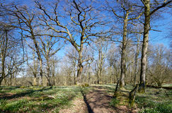 Grönt och blomma Rich Oak Forest Royaltyfria Bilder