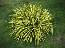 Grönt och gult blad av trädet royaltyfri bild