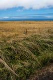 Grönt och gult gräs bredvid hav Royaltyfria Bilder