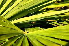 Grönt påkostat stycke Fotografering för Bildbyråer