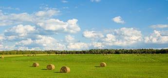 grönt panorama- för fält Royaltyfri Foto