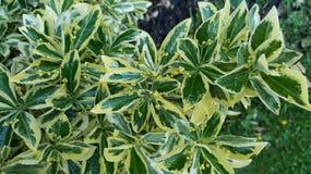 grönt paradis royaltyfria foton
