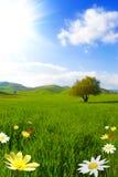 grönt paradis royaltyfria bilder