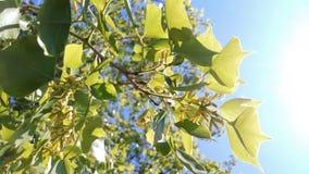 Grönt planet Royaltyfria Bilder