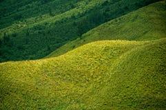 Grönt prärielandskap Arkivfoton