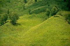 Grönt prärielandskap och par av träd Royaltyfria Foton
