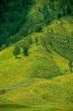 Grönt prärielandskap och par av träd Arkivbild