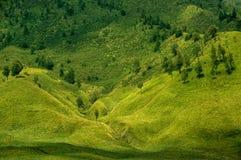 Grönt prärielandskap och par av träd Fotografering för Bildbyråer