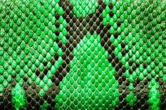 Grönt pytonormläder, hudtextur för bakgrund Fotografering för Bildbyråer