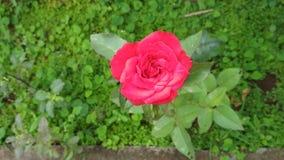 Grönt rött Royaltyfria Foton