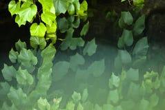 grönt regn Royaltyfri Bild