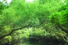 grönt regn för skog arkivfoton