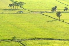 Grönt ricefält Royaltyfri Foto