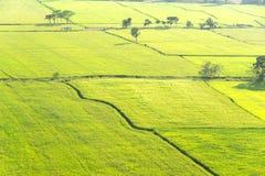 Grönt ricefält Royaltyfri Fotografi