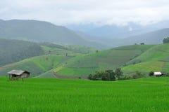 Grönt ricefält i berg Royaltyfri Foto