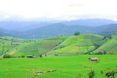 Grönt ricefält i berg Fotografering för Bildbyråer