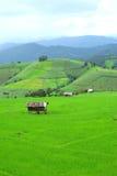 Grönt ricefält i berg Arkivfoto