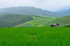 Grönt ricefält i berg Royaltyfria Bilder