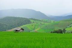 Grönt ricefält i berg Arkivbild