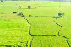 Grönt Ricefält i Kanchanaburi, thailand Fotografering för Bildbyråer