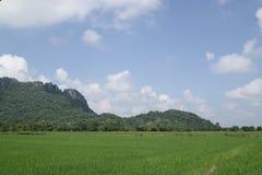 Grönt ricefält och blå sky. Royaltyfri Bild