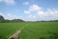 Grönt ricefält och blå sky. Royaltyfria Foton