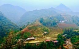 Gr?nt ris terrasserar SaPa Vietnam royaltyfri bild