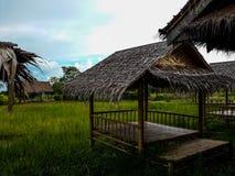 Grönt risfältfält och bambukoja Arkivbild