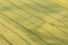 Grönt såddfält Arkivbild