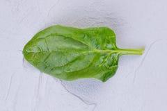Grönt saftigt basilikablad Royaltyfria Bilder