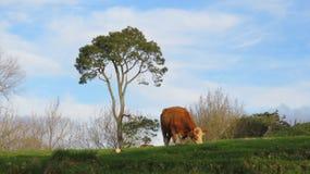 Grönt skönhetland Royaltyfri Fotografi