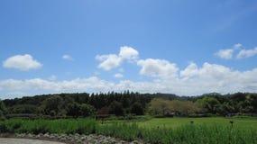 Grönt skönhetland Arkivbild
