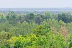 Grönt skoglandskap Royaltyfria Bilder