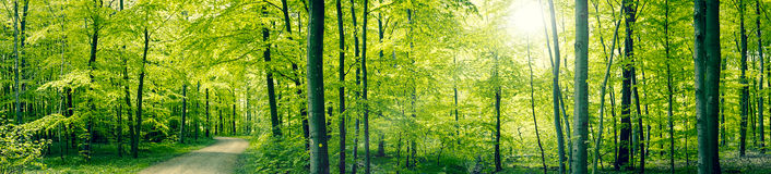 Grönt skogpanoramalandskap Arkivbild