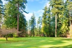 Grönt soligt parkerar med stora träd arkivfoton