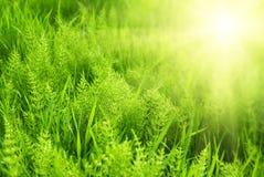grönt solljus för gass royaltyfri fotografi