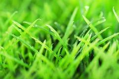 Grönt sommargräs royaltyfria bilder