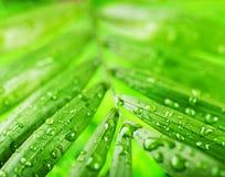 Grönt sommargräs royaltyfri bild
