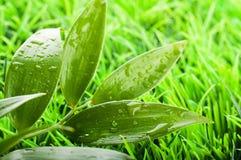 Grönt sommargräs royaltyfria foton