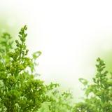 Grönt sommargräs arkivbild