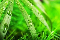 Grönt sommargräs i en sun royaltyfri bild
