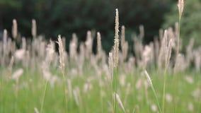 Grönt sommargräs och solsken stock video