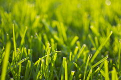 grönt sommarsolljus för gräs Fotografering för Bildbyråer