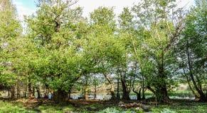 grönt ställe Arkivfoto
