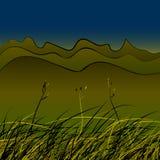 Grönt stäppgräs Arkivfoton