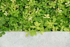 Grönt staket Royaltyfria Foton