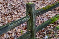 Grönt staket Arkivbilder