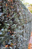Grönt staket royaltyfri fotografi